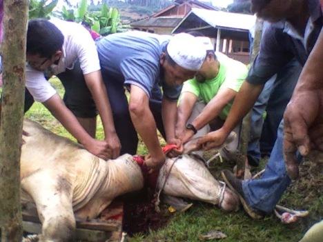 Image result for gambar sembelih lembu